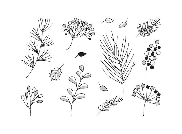 Gezeichnete pflanzenvektorsymbole. vintage-blumenset. schwarzer zweig, zweig, blätter, beerensammlung. botanische skizzenelemente strichzeichnungen isoliert auf weißem hintergrund. elegante naturillustration