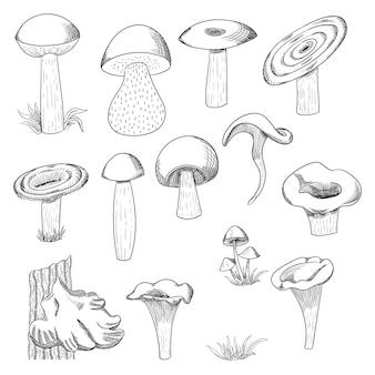 Gezeichnete skizzenillustration des pilzes hand. pilzshiitake, neues biologisches lebensmittel lokalisiert auf weiß.