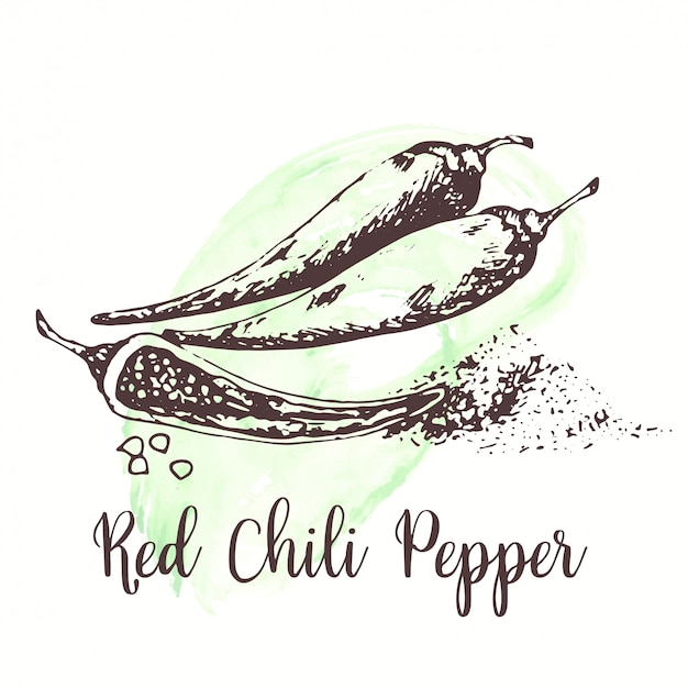Gezeichnete tintenillustration der roten chili pepper-skizze hand