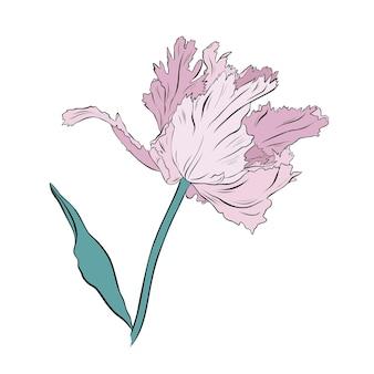 Gezeichnete vektorillustration der hellrosa hübschen tulpe hand auf weißem hintergrund.