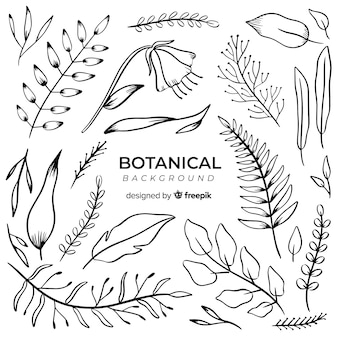 Gezeichneter botanischer hintergrund der weinlese hand