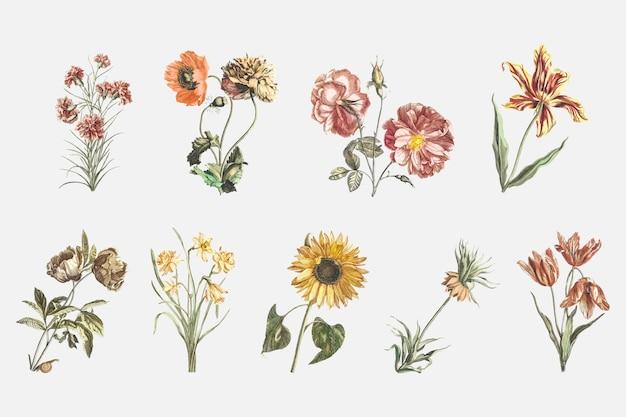 Gezeichneter illustrationssatz des weinleseblumenvektors hand