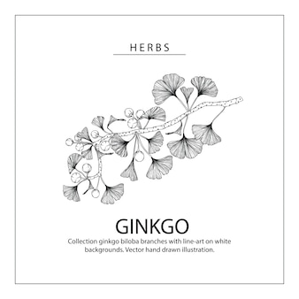 Ginkgo biloba blatt- und blütenzeichnungen