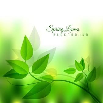 Glänzende grüne blätter frühjahr hintergrund