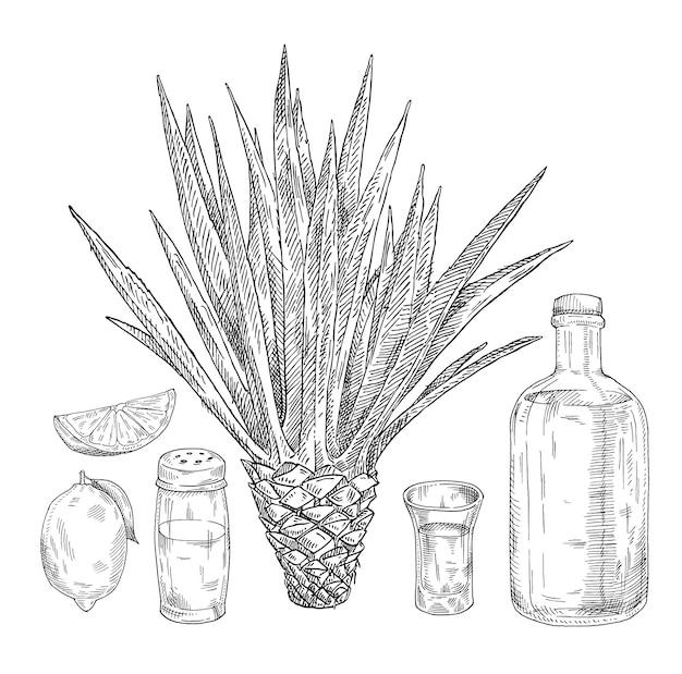 Glas und flasche tequila salzstreuer limettenkaktus blaue agave handgezeichnete schraffur