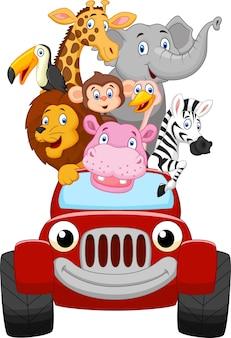 Glückliches Tier der Karikatur mit rotem Auto