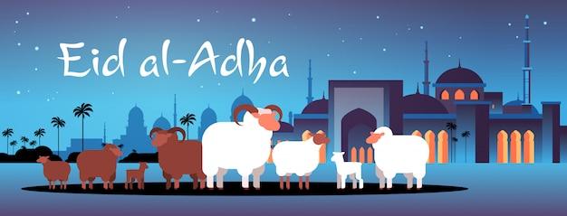 Glücklich eid al-adha mubarak muslimischen feiertagskonzept weiße und schwarze schafherde festival des opfers nabawi moschee gebäude nacht stadtbild flach in voller länge horizontal