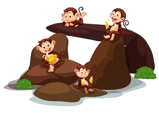 Glückliche affen, die banane am stein essen