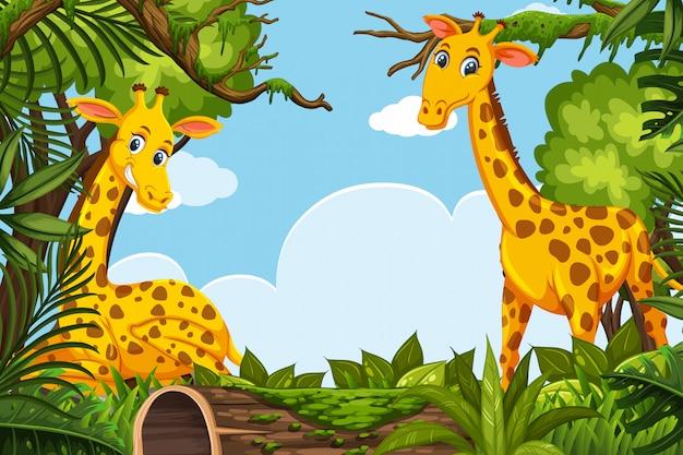 Glückliche giraffen in der dschungelszene