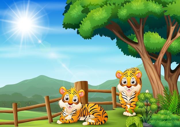 Glückliche zwei tiger, die im offenen zoo spielen