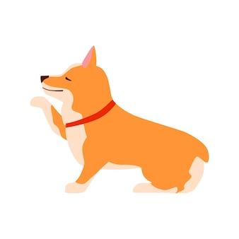 Glücklicher süßer hund. waliser corgi. welpe sitzt und gibt pfote. flache vektorillustration.