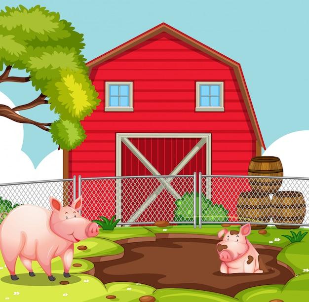 Glückliches schwein am ackerland