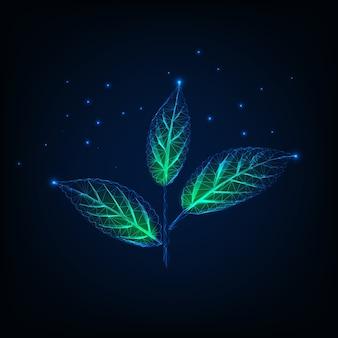 Glühende niedrige polyanlage mit stamm- und grünblättern