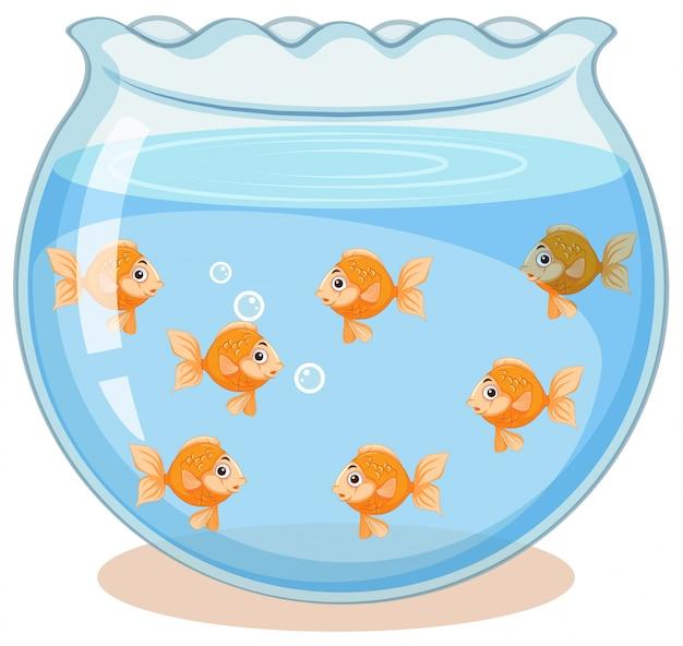 Goldener fisch im tank