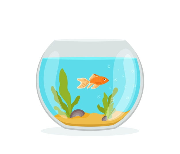 Goldener fisch in einem aquarium