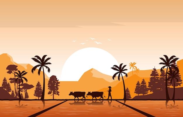 Goldener sonnenaufgang in der asiatischen reisfeld-reisfeld-plantagen-landwirtschaftsillustration