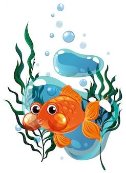 Goldfisch, der unter wasser schwimmt