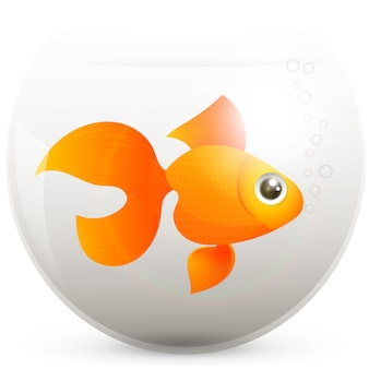 Goldfisch in einem goldfischglas