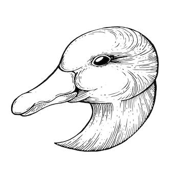 Goose ink zeichnung