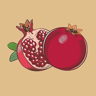 Granatäpfel im vintage-stil. farbige vektorabbildung