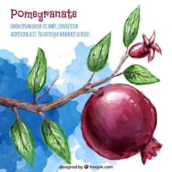 Granatapfel-aquarell-hintergrund