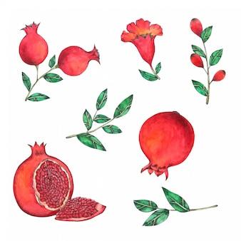 Granatapfel handgemalt in aquarell-sammlung