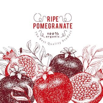 Granatapfelfrucht-designschablone. hand gezeichnete vektorfruchtillustration. gravierter retro- botanischer hintergrund der art.