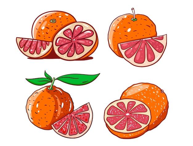 Grapefruit im karikaturstil mit umriss. handgemalt