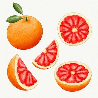Grapefruitsammlung