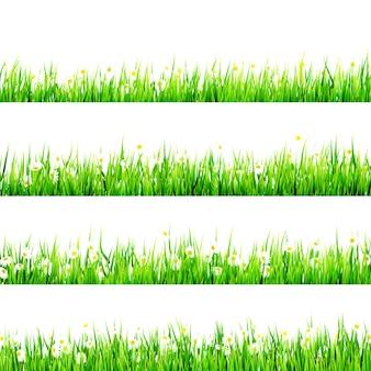 Gras mit dem kleinen weißen gänseblümchen.