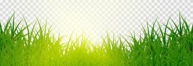 Gras, rasen. gräser png, rasen png. junges grünes gras mit sonnenblendung.