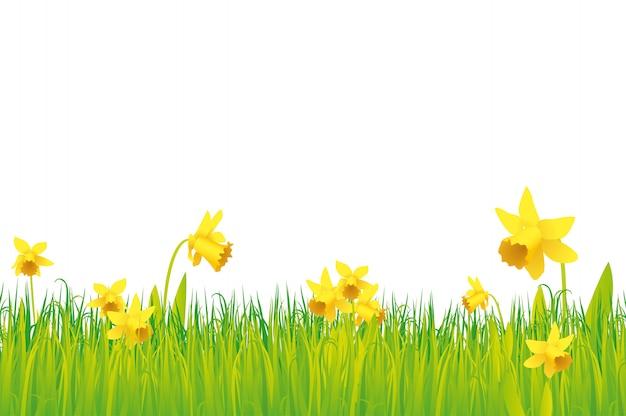 Gras und narzissen