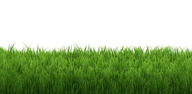Grasgrenze isoliert weißer hintergrund mit farbverlaufsnetz