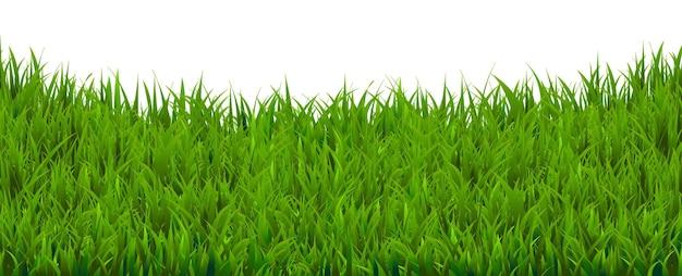 Grasgrenze