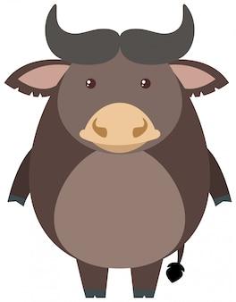Grauer büffel auf weißem hintergrund