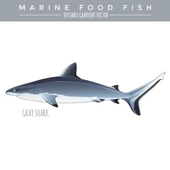 Grauer hai. marine food fisch