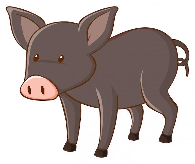 Graues schwein auf weißem hintergrund