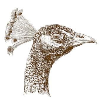 Gravieren der antiken illustration des pfaukopfes