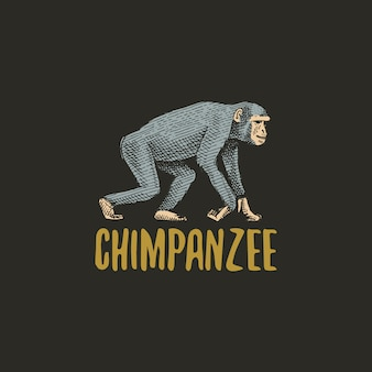 Gravierte hand des schimpansen, gezeichnet im alten skizzenstil, schimpansenlogo der weinlese-tiere