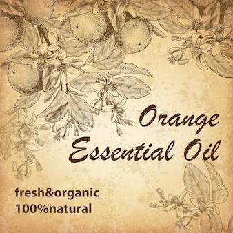 Gravierte orangenfrüchte, blätter, zweige und blühende blüten