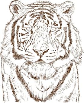 Gravur zeichnung des tigers
