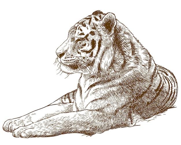 Gravurzeichnung illustration des sibirischen tigers amur tiger Premium Vektoren