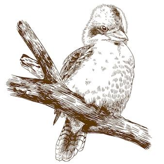 Gravurzeichnung illustration von lachendem kookaburra
