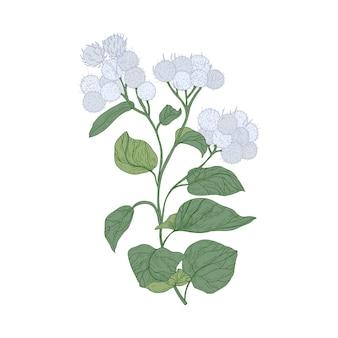 Größere klettenblüten isoliert auf weiß