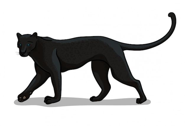 Große katze des panthers lokalisiert in der karikaturart. pädagogische zoologieillustration