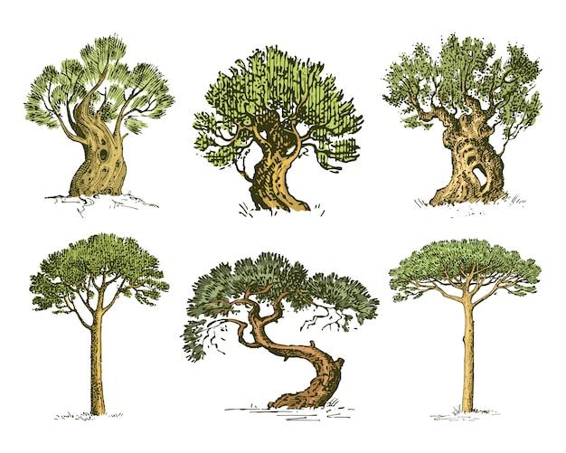 Große menge von gravierten, handgezeichneten baum gehören kiefer, olive und zypresse, tannenwald isoliertes objekt.
