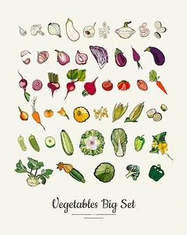 Große reihe von hipster handgezeichneten farbigen gemüse