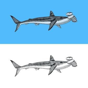 Großer hammerhai marine raubtier requiem tier leben im meer handgezeichnete vintage gravierte skizze