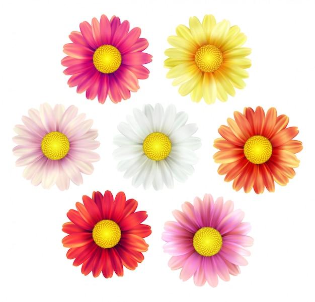 Großer satz schöne bunte frühlingsgänseblümchenblumen lokalisiert