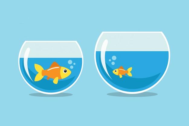 Großer und kleiner goldfisch, der einander betrachtet